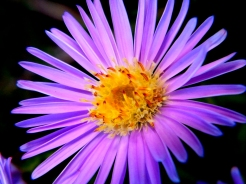 flora (7)