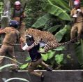 Leopard injures 11 people in India