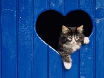 love-kitten-402