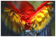 Parrot_Wings_B