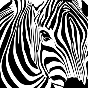 photos,animal,cute,pattern,art,zebra-1b774b13462d982682cbabbcc412d19d_h