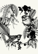 Fantail by Flox