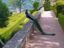 gardens Marqueyssac 6