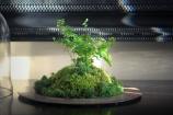 terrarium idea