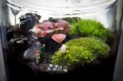 mini people in terrarium
