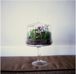 plants - cake stand terrarium you are my fave