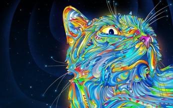 Midnight Cat.WP