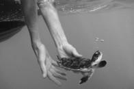 turtle hand