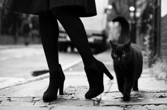 black-cat-high-heels