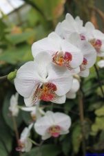 Botanic Gardens Melbourne Australia August 2012-30 white orchid