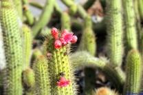 Botanic Gardens Melbourne Australia August 2012-39 cactus