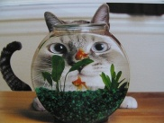 Kitty Fishbowl