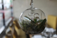 Various different types of terrariums were all over Melbourne..
