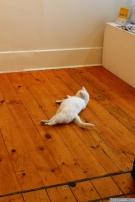 Gallery cat!!