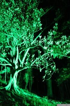 Art in the Dark Nov 2012 (33)