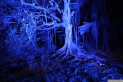Art in the Dark Nov 2012 (34)