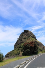 Lion Rock and Pohutukawa