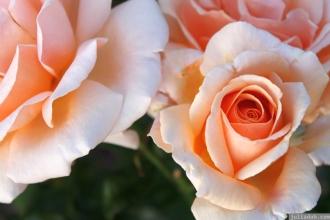 Parnell Rose Garden January 2013 022
