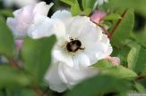 Parnell Rose Garden January 2013 026