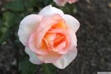 Parnell Rose Garden January 2013 029