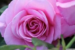 Parnell Rose Garden January 2013 032