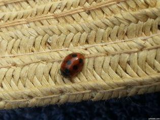 Ladybug at Lake Wanaka