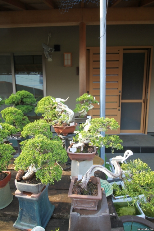 KOJU-EN SHOHIN NURSERY IN KYOTO, JAPAN