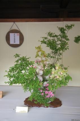 Bonsai, Japan, 2015 020
