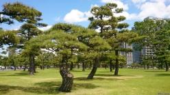Nature, Japan, 2015 003