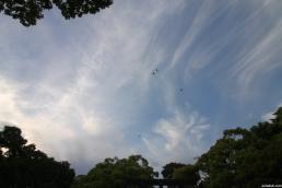 Nature, Japan, 2015 029