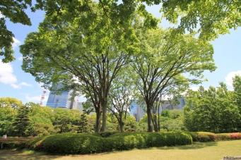 Nature, Japan, 2015 036
