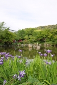 Nature, Japan, 2015 041