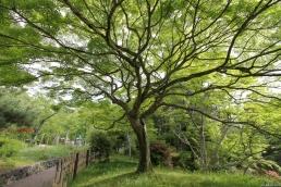 Nature, Japan, 2015 042