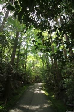 Nature, Japan, 2015 048