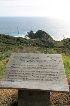 """The rocky point jutting out to sea is Te Reinga the place where the spirits enter the underworld. Clinging to the rock there is the ancient kahika tree, named Te Aroha. The spirits descend to the water on steps formed by the trees roots. They then continue on their journey to Hawaiki, the spiritual home."" Cape Reinga"